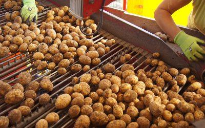 Fürstenhof Bio-Kartoffeln