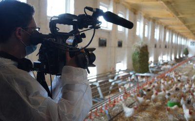 Fürstenhof im NDR Fernsehen